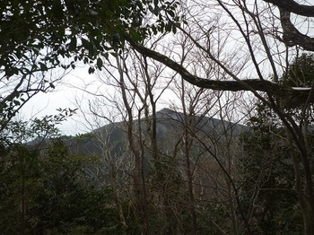 P1070873 518mピーク先端から樹間に桂木山山頂を遠望.JPG