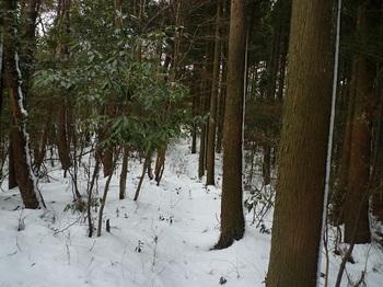P1070893右植林境.JPG