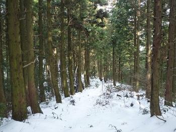 P1070907植林尾根・白糸の滝コース分岐部.JPG