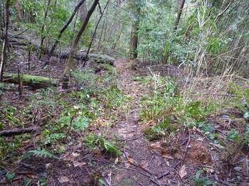 P1080059林道からの踏み跡.JPG