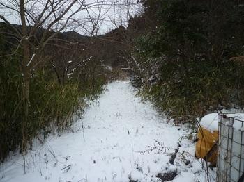 P1080154林道.JPG