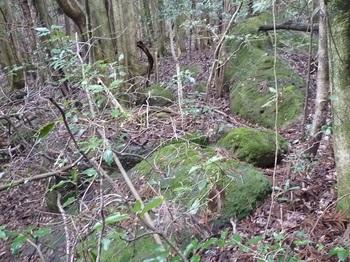 P1080251 R-3岩群U.JPG