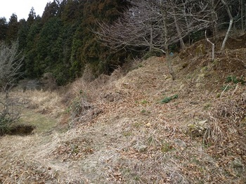 P1080320山道支尾根取り付き(逆方向).JPG