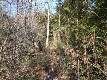 P1080342荒れ加減の植林境.JPG