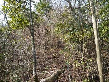 P1080382低雑木疎林ヤブ.JPG