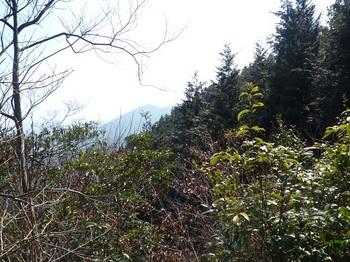 P1080386ヒノキ植林境ヤブ.JPG