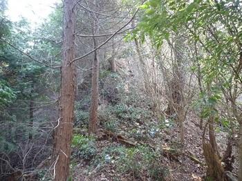 P1080392植林境・歩きやすくなる.JPG