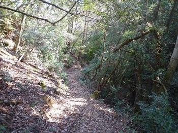 P1080446谷沿いの下山道.JPG