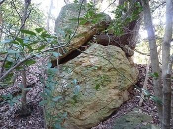 P1080510 Y-1岩側面.JPG