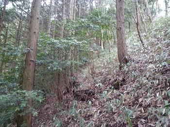 P1080551植林境の斜面.JPG