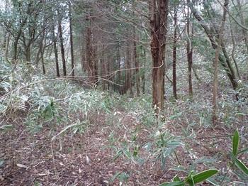 P1080560山頂手前鞍部から右(北側)の植林谷.JPG