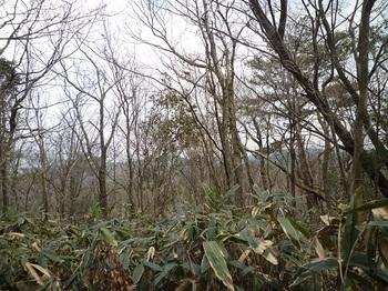 P1080565北東方向の樹間展望.JPG