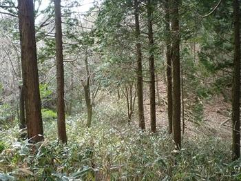 P1080567ヒノキ植林境の鞍部.JPG