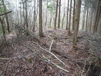 P1080572枝打ちされた植林境と小コン杭.JPG