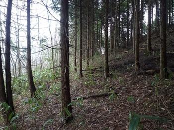 P1080576植林境.JPG