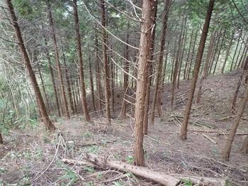 P1080578植林境.JPG