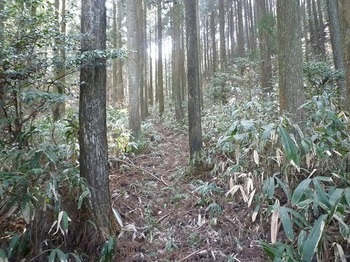 P1080644舞谷からのササ刈りされた山道(逆方向).JPG