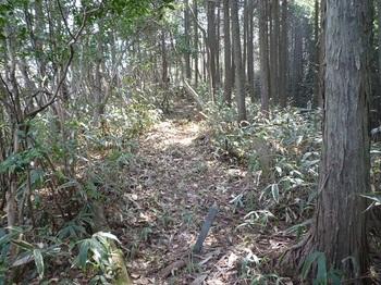 P1080647ササ刈りされた植林境.JPG