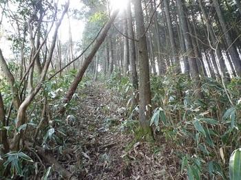 P1080650植林境.JPG