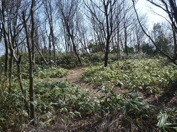 P1080654山頂手前でササ刈り山道へ出会う.JPG
