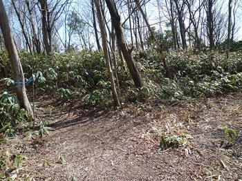 P1080656山道分岐(山頂は左).JPG