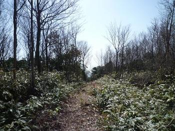 P1080657南方向の登山道.JPG