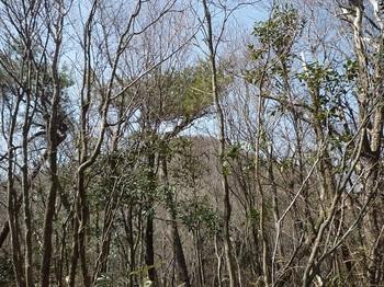P1080669小ピークから樹間越しの山頂.JPG