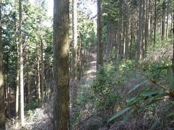 P1080673 560m鞍部付近から左下に林道が見える.JPG