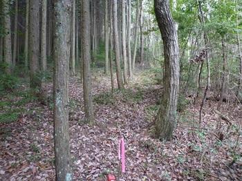 P1080826植林境.JPG