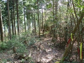 P1080863ヒノキ植林境(下り方向).JPG