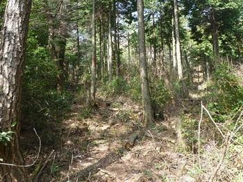 P1080864ヒノキ植林境(上り方向).JPG