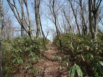 P1080871山頂への切開き道.JPG