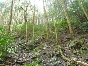 P1080995右の植林斜面を登る.JPG