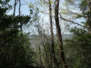 P1090012 北西方向の樹間展望.JPG
