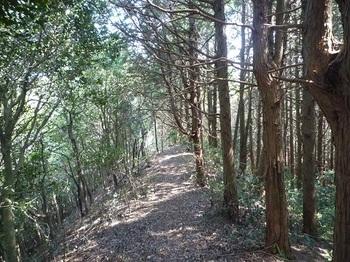 P1090192右側ヒノキ植林境となる.JPG