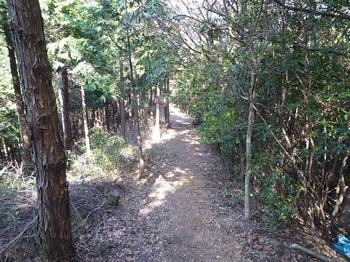 P1090203植林沿いの尾根道.JPG