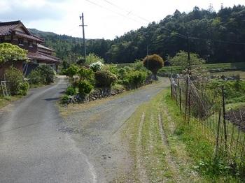 P1090233林道が右へ分岐.JPG