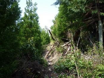 P1090260植林帯の平行道.JPG