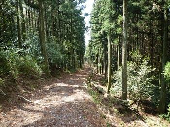 P1090300林道.JPG