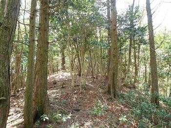 P1090304ヒノキ林境.JPG