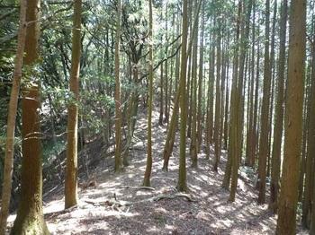 P1090325右側植林帯.JPG