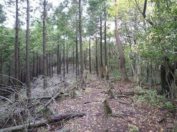 P1090370ヒノキ林境(平坦尾根).JPG