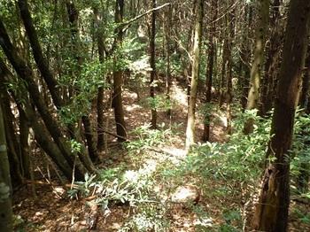 P1090411ヒノキ林境の鞍部.JPG