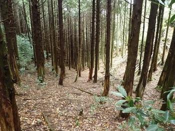 P1090412鞍部から右の谷方向.JPG