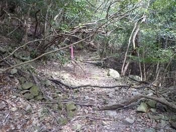 P1090652荒れ林道.JPG