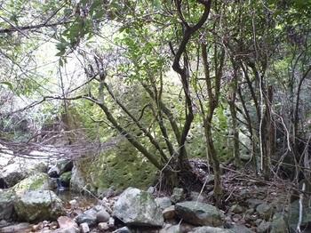 P1090671大岩.JPG
