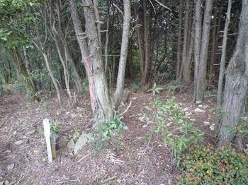 P1090740ヒノキ林境の下降地点.JPG