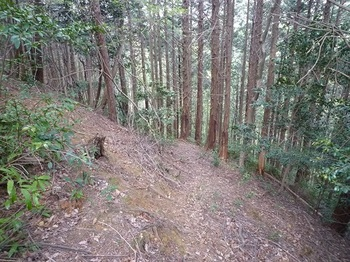 P1090766植林帯の巻き道.JPG