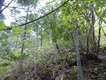 P1090911ヒノキ林境・ネット跡.JPG