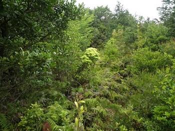 P1090930ヒノキ林境のヤブ.JPG